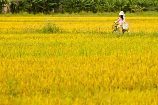 VIẾT CHO KÝ ỨC  <br>Trần Thị Quỳnh