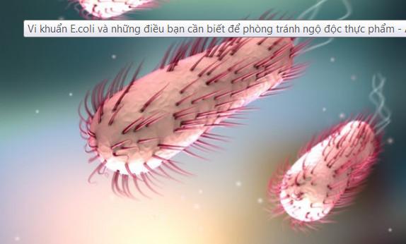 Vi khuẩn E.coli và những điều bạn cần biết để phòng tránh ngộ độc thực phẩm