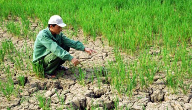 WB phê duyệt khoản vay mới hỗ trợ Việt Nam ứng phó biến đổi khí hậu